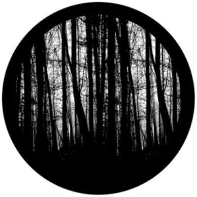 gobo 81175 - Blair Woods(81175)